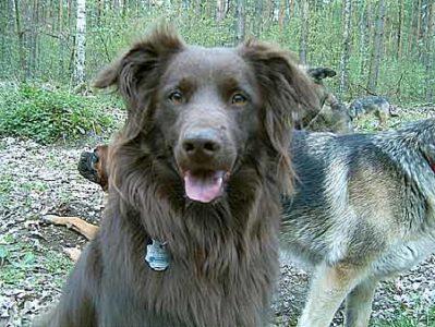 Hund Anton