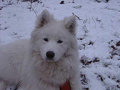 Hund Arik 01