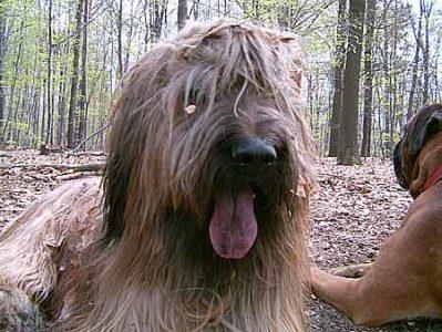 Hund Bayou