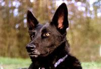 Hund Brancz 01