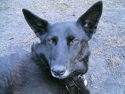 Hund Brancz 02