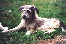 Hund Daryl 02