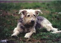 Hund Donatus 02