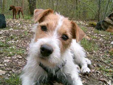 Hund Gino 01