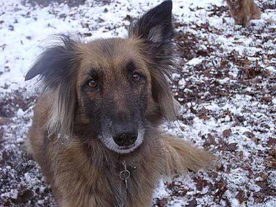 Hund Josy 02