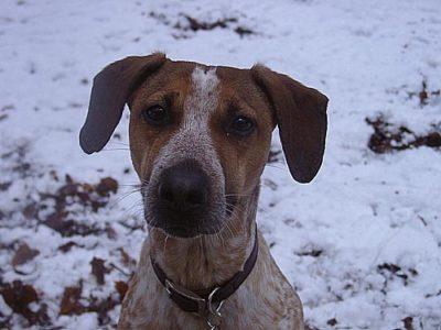 Hund Lilli