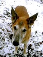 Hund Lou 01