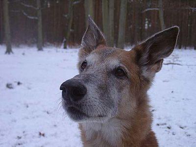 Hund Lou 03