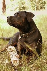 Hund Tami 03