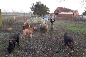 Hunde-Ferienhof-Mecklenburg (06)