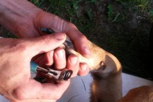 Hundefriseur (1)