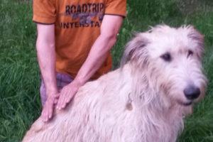 Hundefriseur (12)