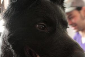 Hundefriseur (20)