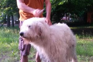 Hundefriseur (26)