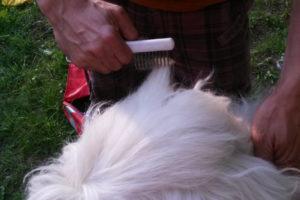 Hundefriseur (27)