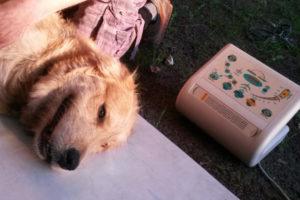 Hundefriseur (5)