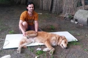 Hundefriseur (7)
