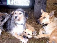 Lucky Dog (1)