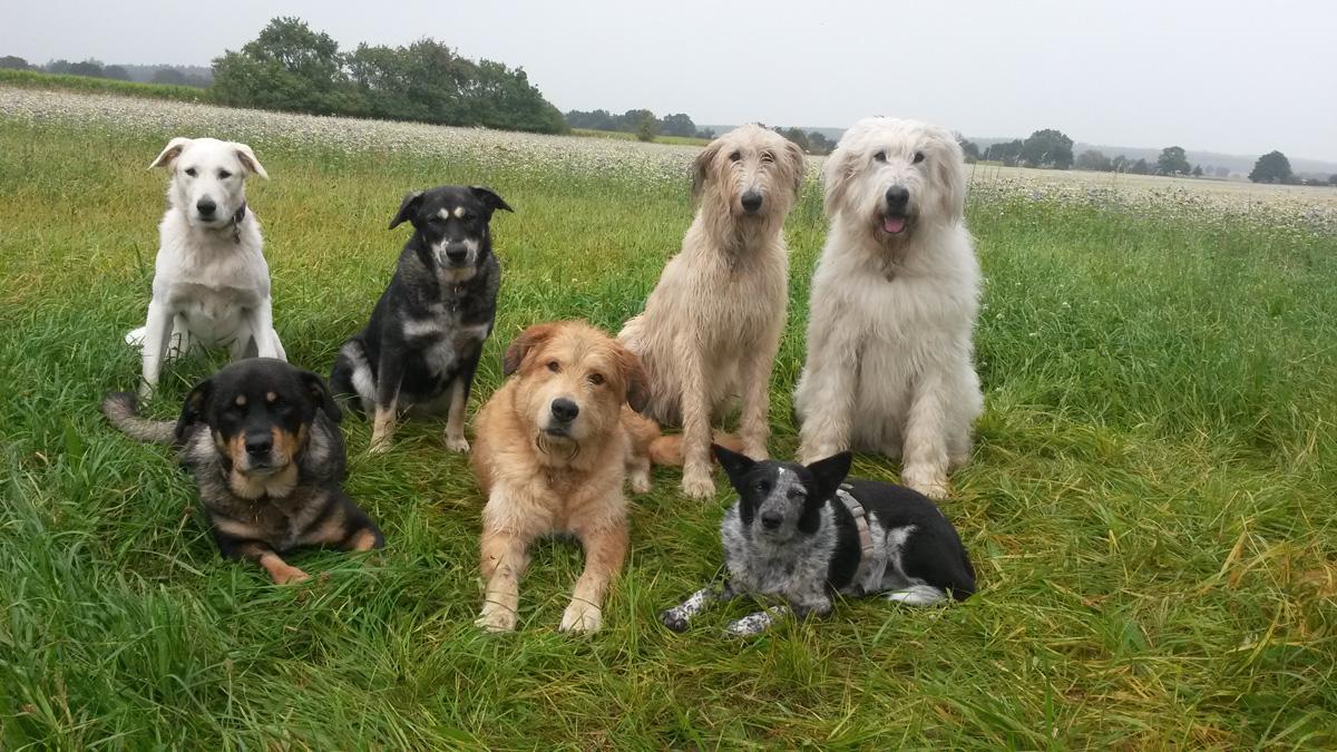 Lucky Dog (11)