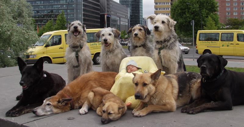 Lucky Dog (3)