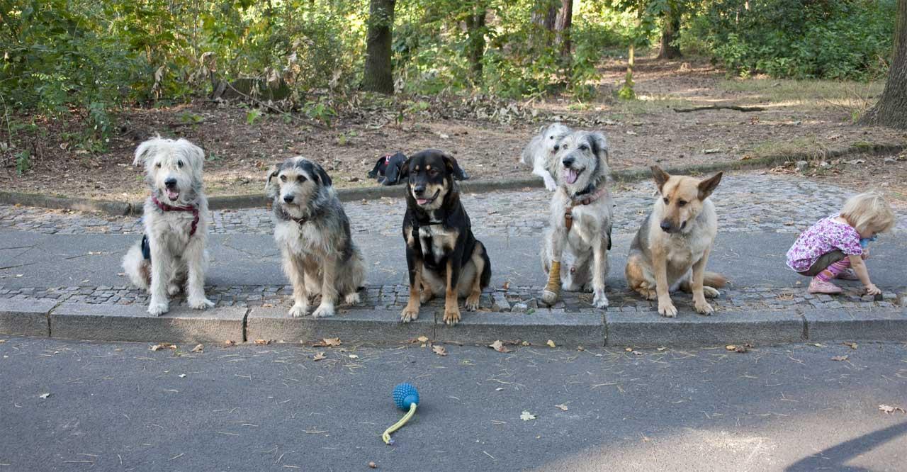 Straßentraining mit Lucky Dog