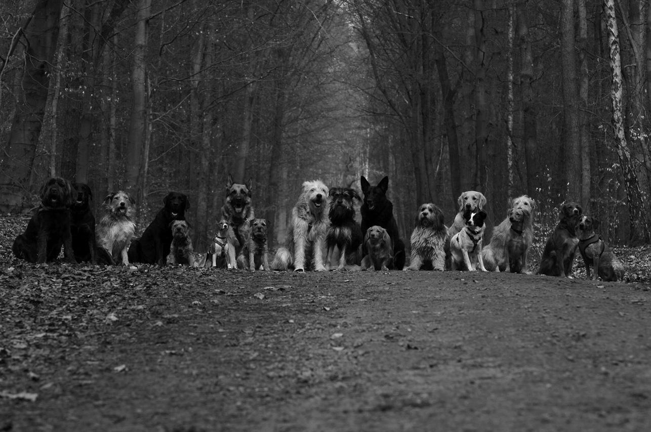 Lucky Dog (42)