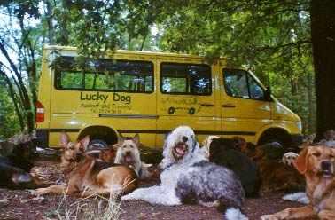 Hunde beim Lucky Dog Ausführservice