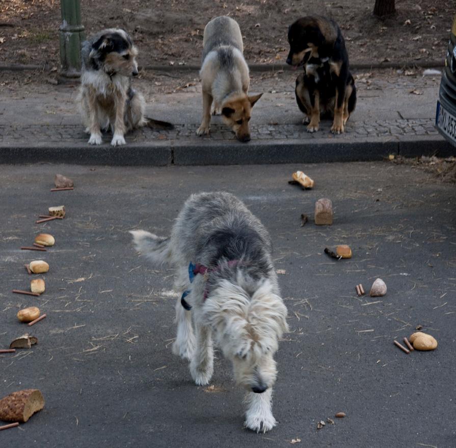 Lucky Dog (59)