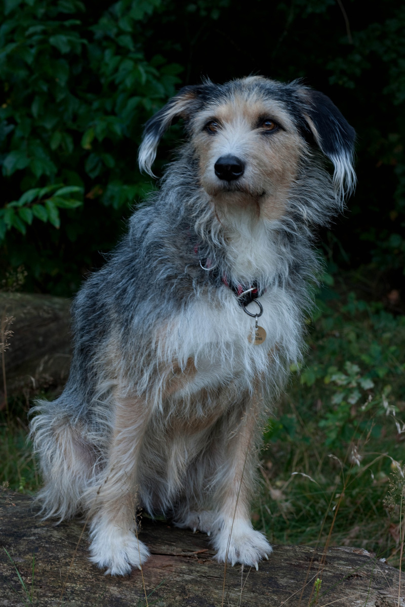 Lucky Dog (70)