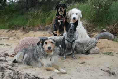 Unsere Hunde im Sommer 2012