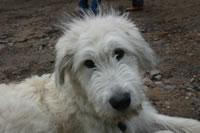 Lucky Dog (80)