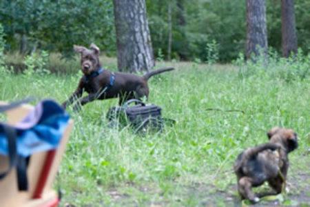 Lucky Dog (84)